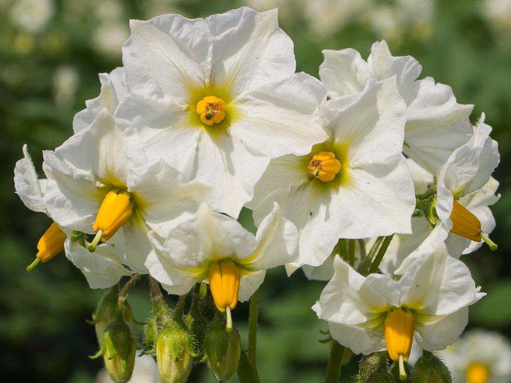 Blüte einer seltenen Pflanze?