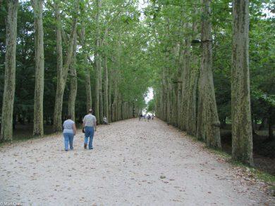 Allee zum Schloss Chenonceau