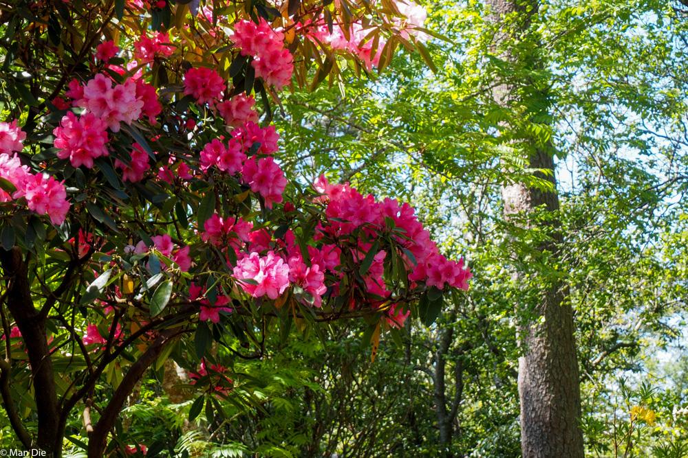 Pflanzen im Inverewe Garden
