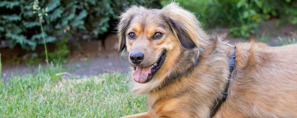 Pleiten Pech und Pannen, Unser Hund im Wohnmobil