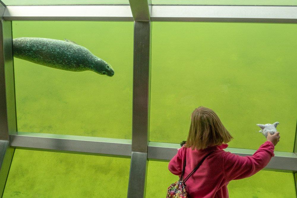 Seehund spielt mit Besucherin