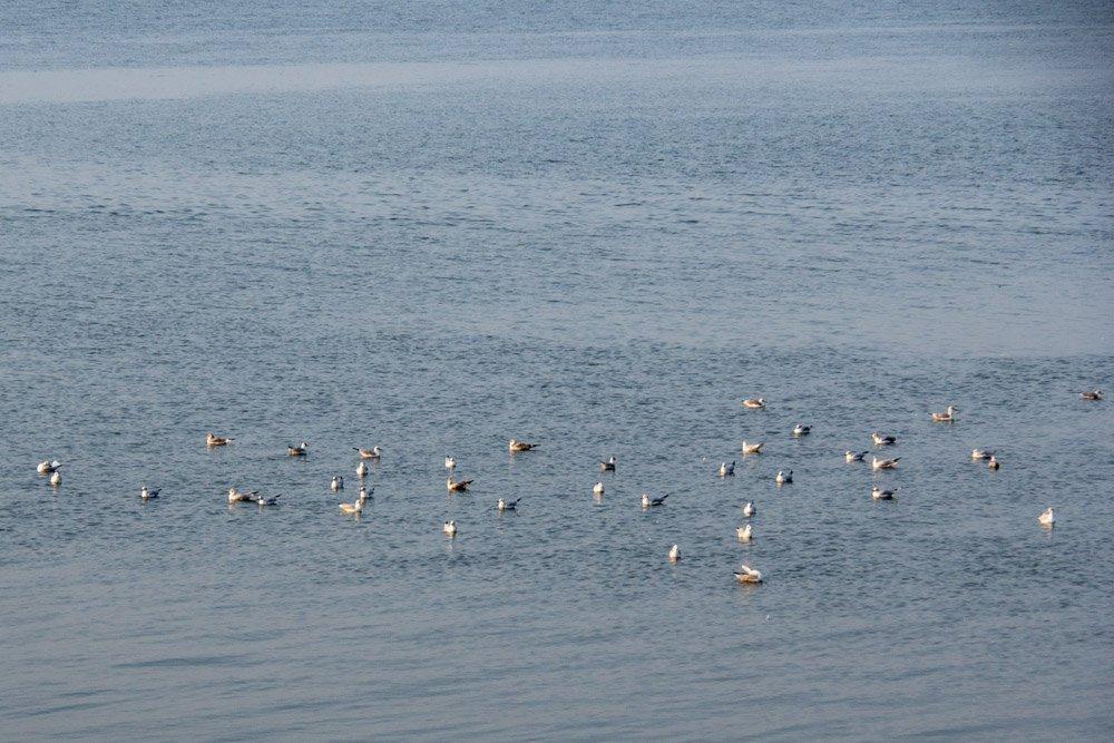 Vögel im Wattenmeer