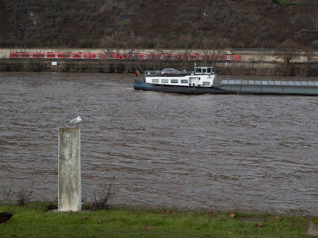 Andernach am Rheinufer Mal in den Rhein reinschauen