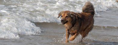Gastbeitrag: Sam Hund auf Reisen, Schottland und Irland