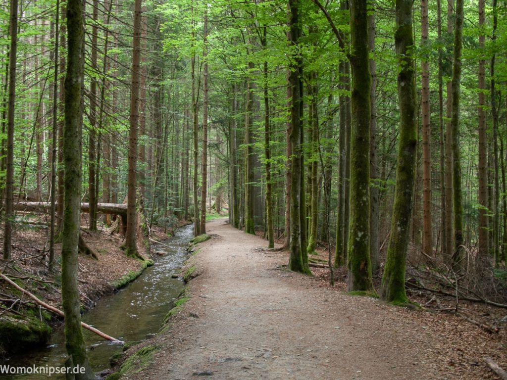 Wanderweg bei Zwiesel