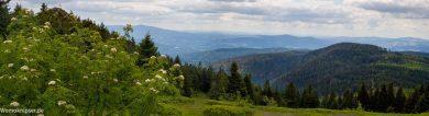 Die Corona Testfahrt: Ein kleiner Ausflug in den Bayerischen Wald