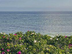Fehmarn, ein Inselurlaub in Corona-Zeiten
