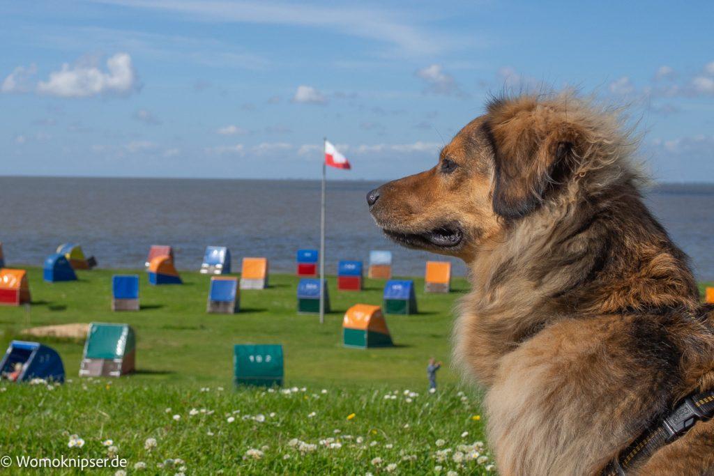 Nur Strandleben und Schiffe, langweilig für uns Hunde