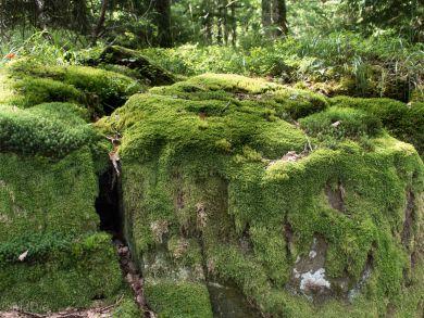 Im Naturreservat
