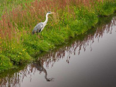 Vogelwelt in der Nähe von Uitdam