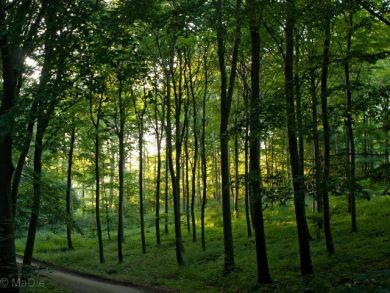 Wald auf Mon