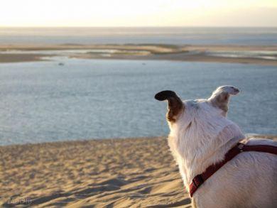 Düne von Pilat unter Hundebeobachtung