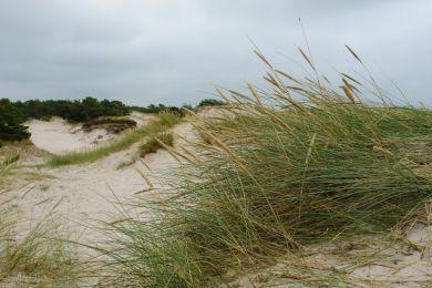 Strand auf Bornhom