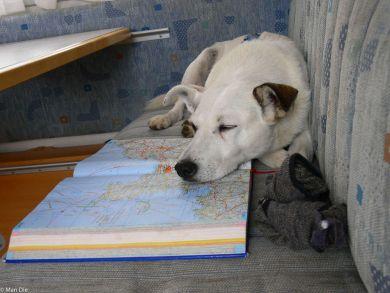 Wo fahren wir jetzt hin? Hund im Wohnmobil