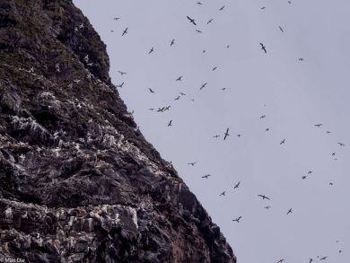 Fahrt zu den Vogelfelsen