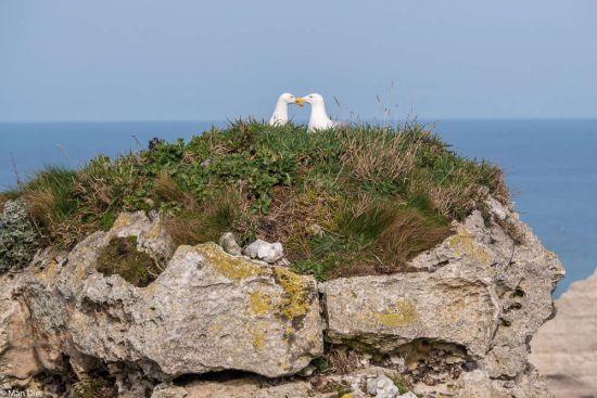 Liebe auf dem einsamen Felsen, gesehen in Etretat, Normandie